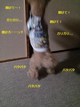 20140804d.jpg