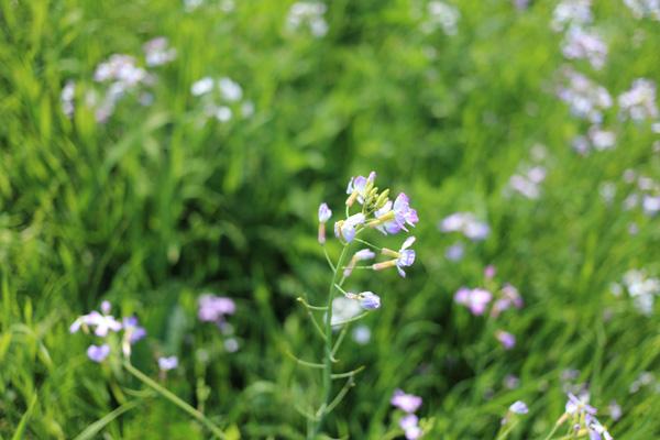 140419_1現像花
