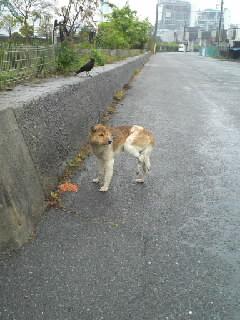 ワイヤー犬1