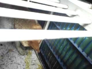 捕獲箱の中のワイヤー犬、見にくいですが、うなだれた頭と右前足が移ってます。床に移ってるのがどちらか分かりませんが、ワイヤー犬の肉片か、脱糞です。肉片は一緒にいた女性2人が見ています
