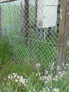 フェンスの写真2
