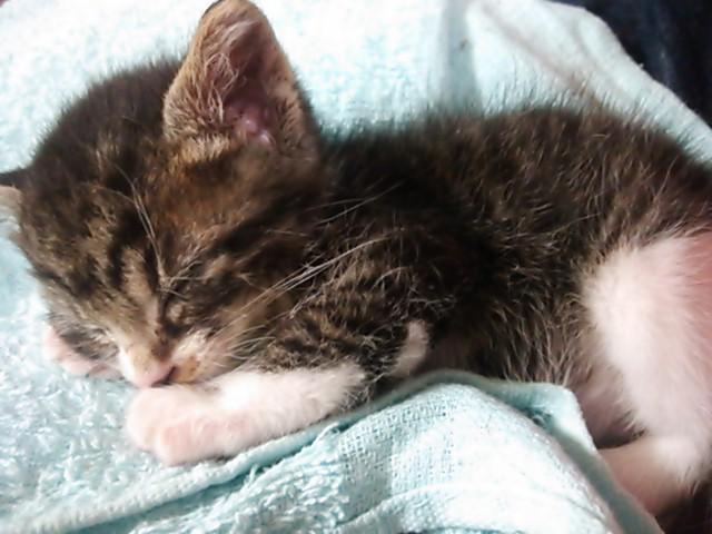 アグネスが保護した子猫5