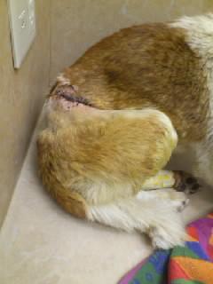退院時の下松市ワイヤー犬の写真です。2