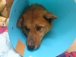 退院時の下松市ワイヤー犬の写真です。5