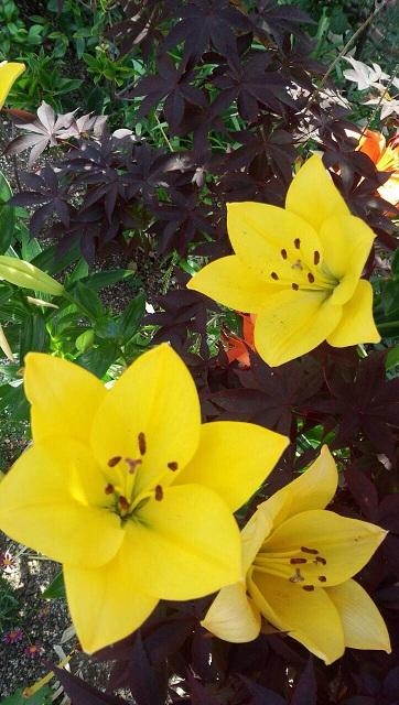 ミーママ家の花2