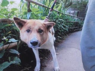 山口県ワイヤー犬2