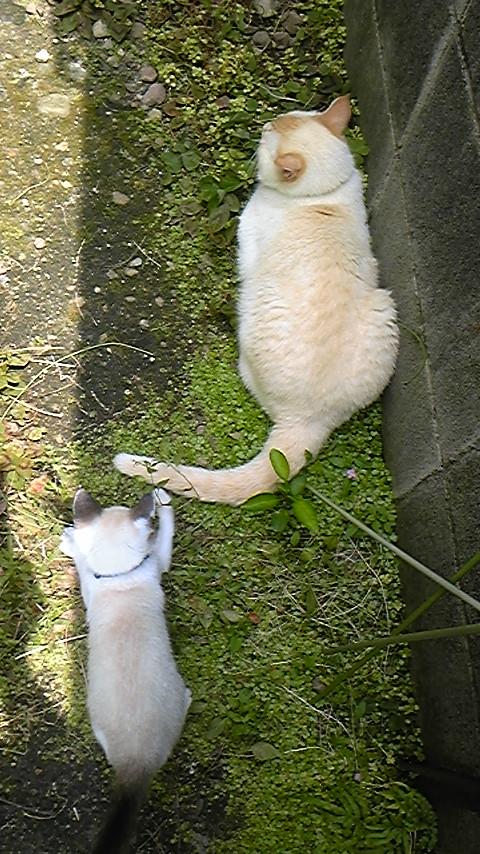 キヨ丸とリン丸1