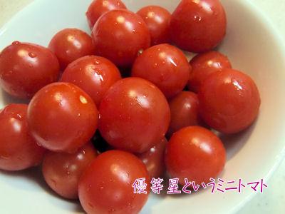 おいしいミニトマトですよ~