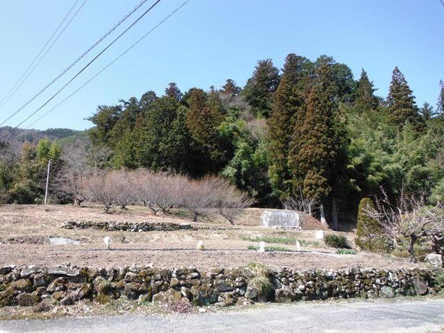 大沢城(阿南町) (41)