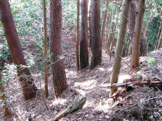 矢草城(阿南町) (8)