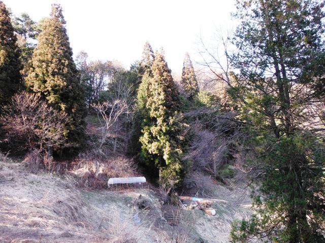 矢草城(阿南町) (65)