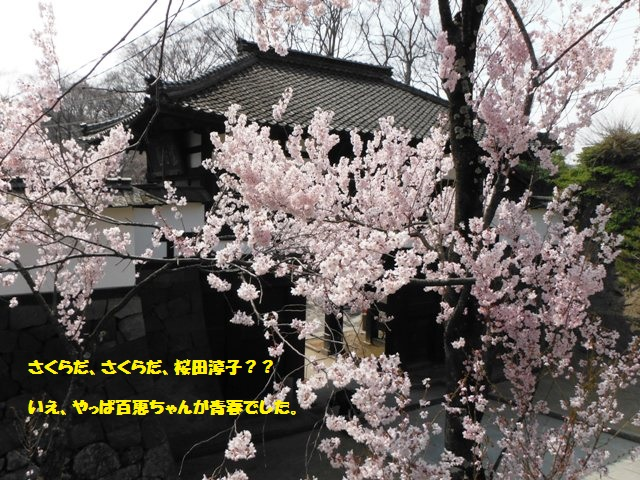 懐古園の桜2014 (4)