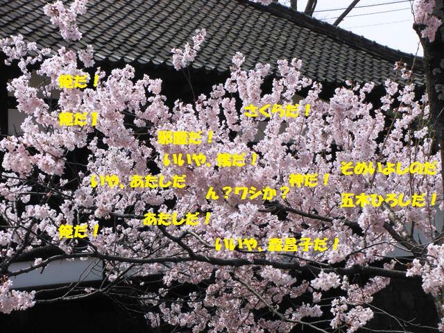 懐古園の桜2014 (6)