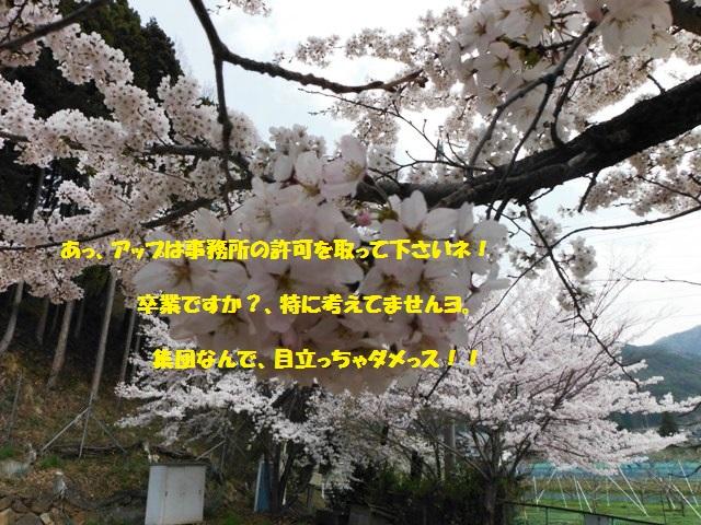 枡形城(高山村) (158)
