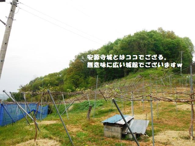 安源寺城(中野市) (56)