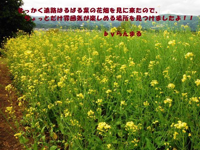菜の花公園②