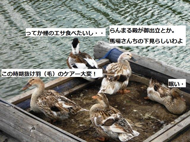 鴨の会話①