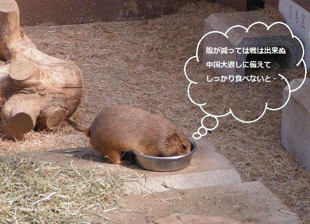 須坂動物園①