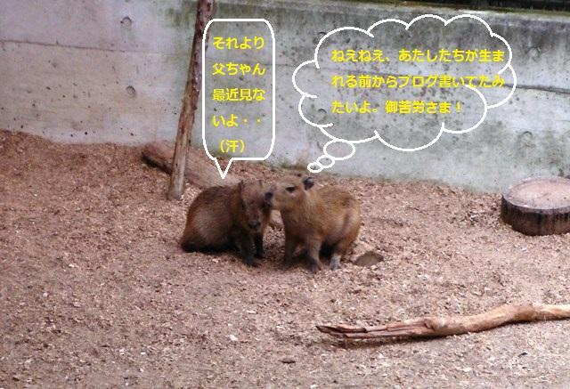 須坂動物園②