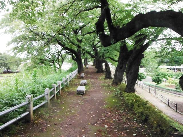 前橋城(群馬県) (6)