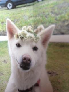 じゅりかなちゃん家の先住犬