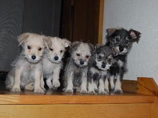 MSSC_0962_20081109080448子犬
