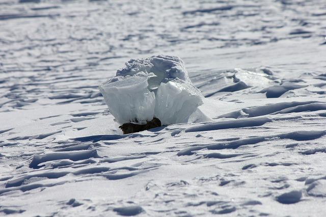 キノコ氷 (7)