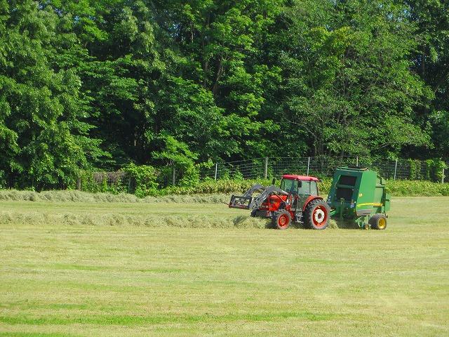 牧草刈り取り 015