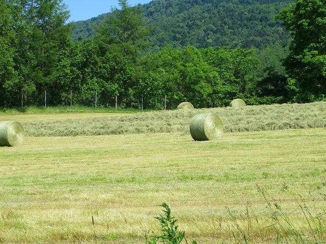 牧草刈り取り 001