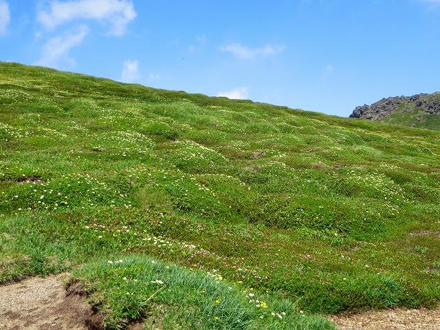 北海岳へ花の道