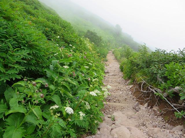 黒岳下山道