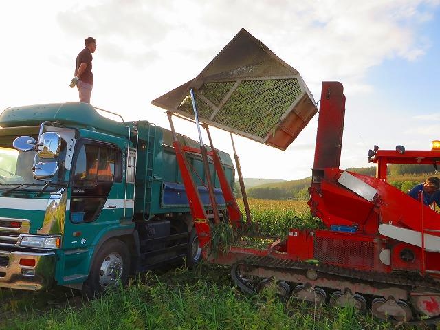 スィートコーン収穫 003