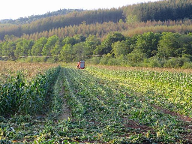 スィートコーン収穫 033