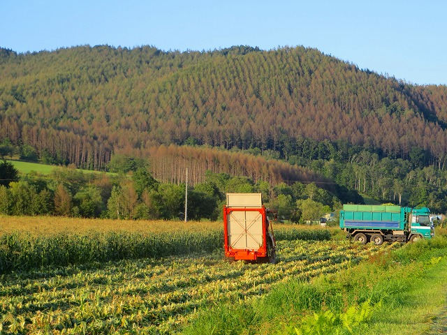スィートコーン収穫 028