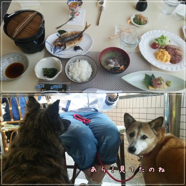 cats1_201404161222140d2.jpg