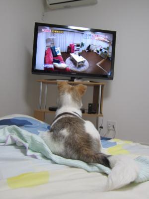 テレビ好き!?