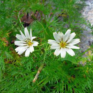 2014,8北アルプスの花-28