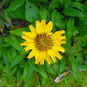 2014,8北アルプスの花-65