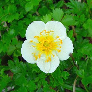 2014,8北アルプスの花-68