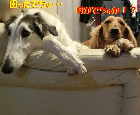 a_201402240128531ec.jpg
