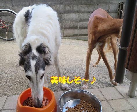 a_201404040103288f5.jpg