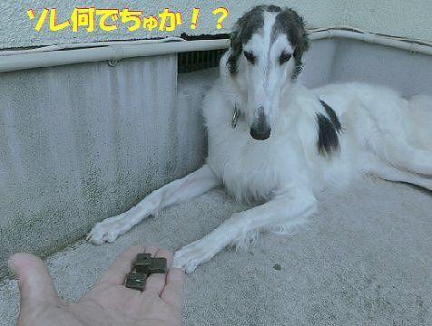 a_2014063002264635c.jpg