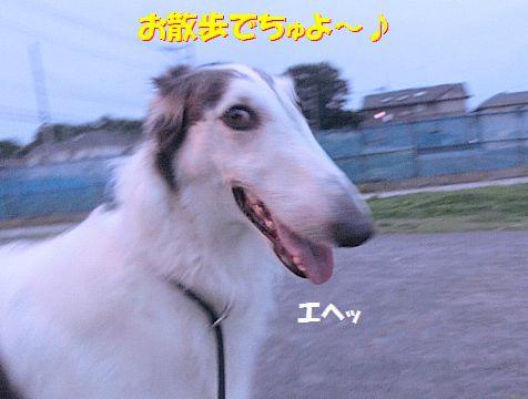 a_20140710201051d10.jpg