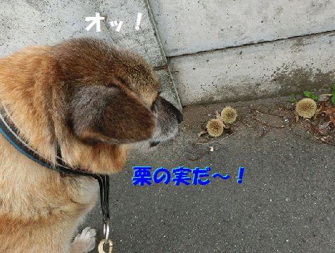 a_20140810123724840.jpg
