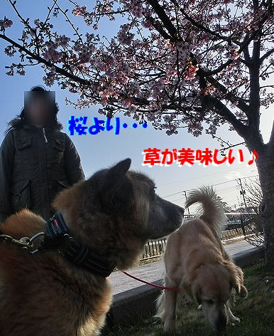 b_20140312074900e95.jpg