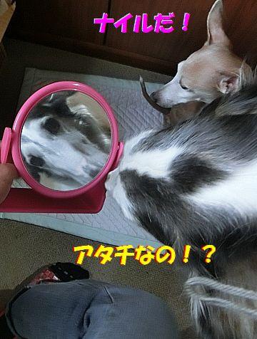 b_20140606215945ae1.jpg