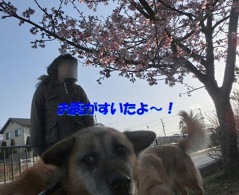 c_2014031207485975f.jpg