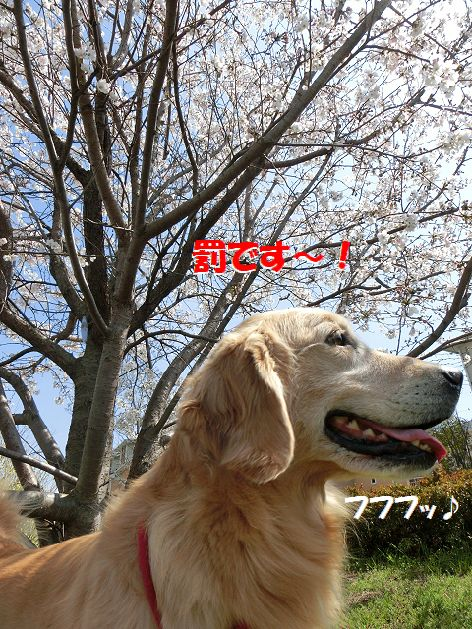 c_2014040120513045c.jpg