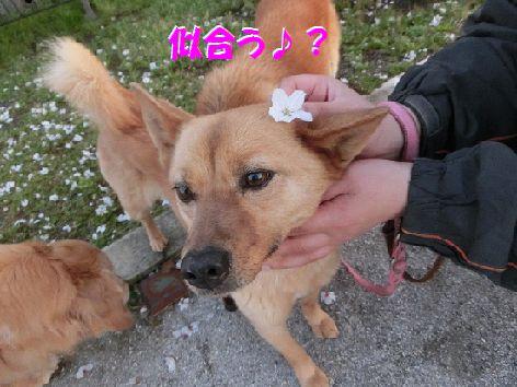 c_20140414193622373.jpg