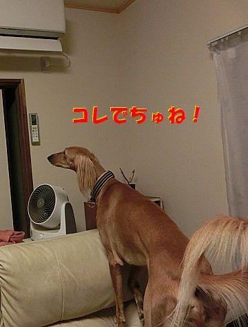 c_20140822023706265.jpg